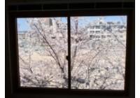 矢島の社窓から